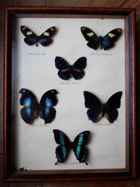 Vintage box-framed butterfies