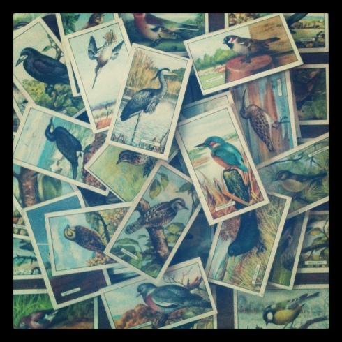 Vintage British Birds cigarette cards